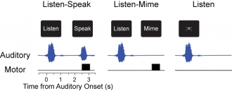 Listen-speak task separates what subjects hear and speak. This lets us identify sensory-motor responses.